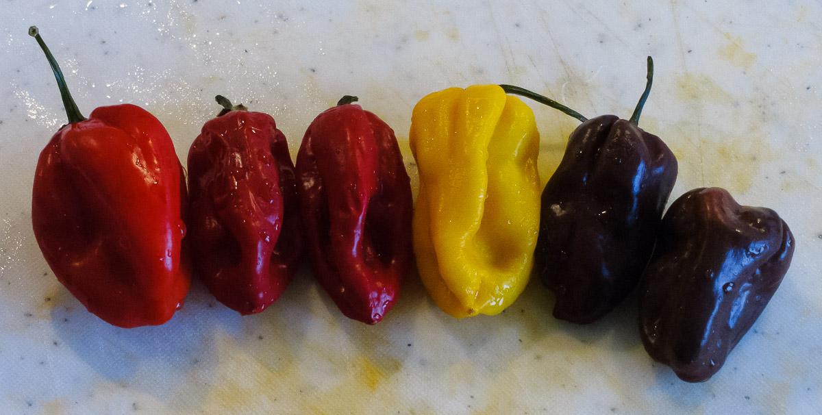 Chilis gewaschen